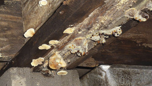 Wood Pest Infestation Inspections