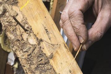 Wood Pest Infestation Inspections