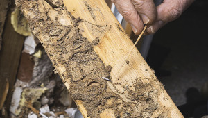 Wood Pest Infestation Inspections Real Estate Agents